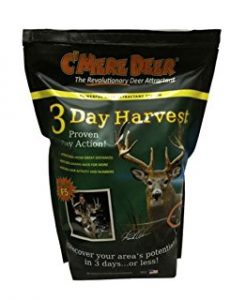 Best Scent Attractant