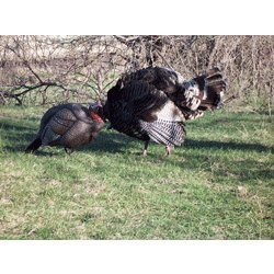 Dakota Decoy Company X-treme Jake Turkey